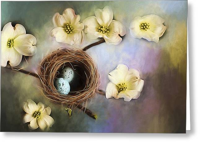 Nesting Among The Dogwoods Greeting Card by Darren Fisher