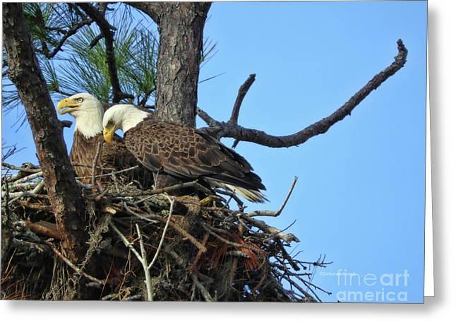 Nesting Bald Eagles 2016 Greeting Card by Deborah Benoit