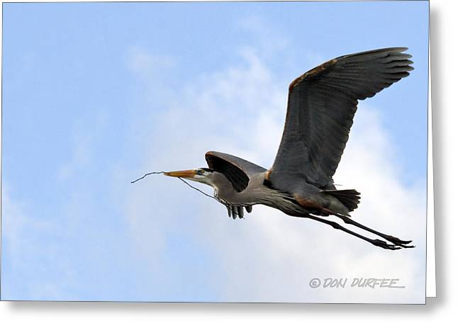 Nesting Material Greeting Card by Don Durfee