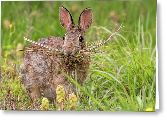 Nesting Rabbit Greeting Card by Terry DeLuco
