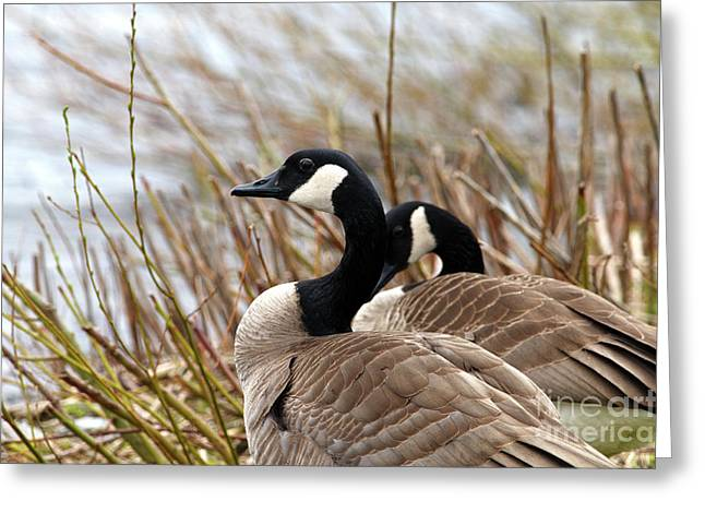 Nesting Time Greeting Card by Sharon Talson