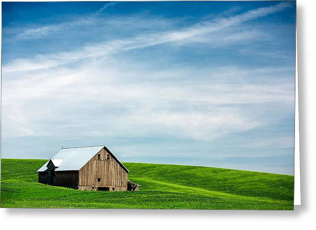 Nestled In Green Greeting Card by Todd Klassy