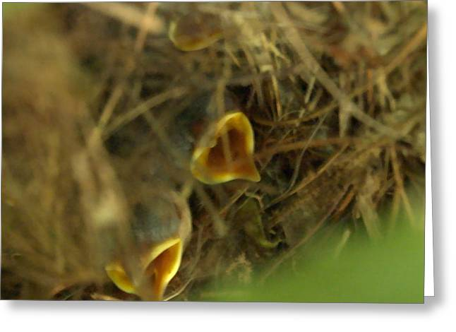 Nestlings Greeting Card