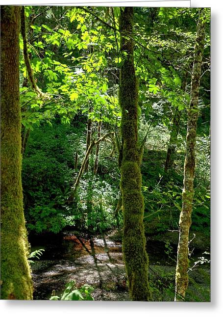 Nestucca River 3039 12x18 Greeting Card by Jerry Sodorff