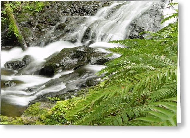 Nestucca River Detail Greeting Card
