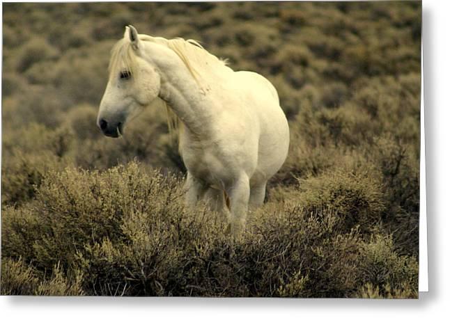 Nevada Wild Horses 4 Greeting Card by Marty Koch