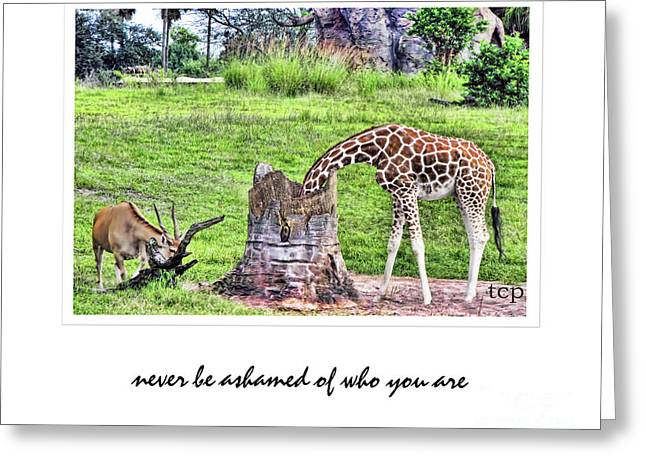 Greeting Card featuring the photograph Never Be Ashamed by Traci Cottingham