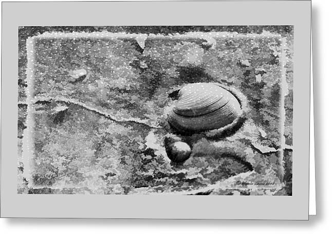 Never Clam Up Bw Greeting Card by Marvin Spates