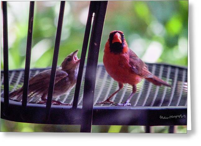New Baby Cardinal Greeting Card