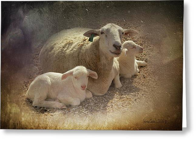 New Baby Lambs Greeting Card by Lena Wilhite