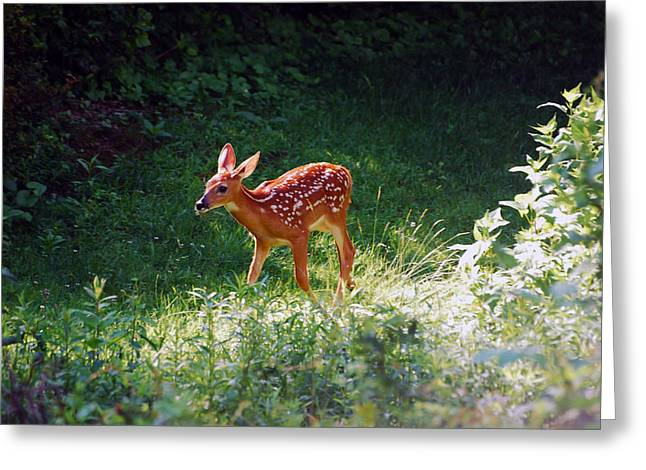 New Backyard Visitor Greeting Card by Lori Tambakis