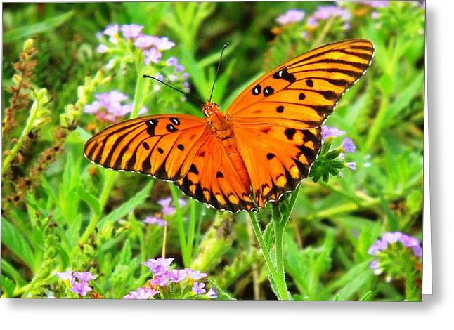 Windows From Heaven Orange Butterfly Greeting Card
