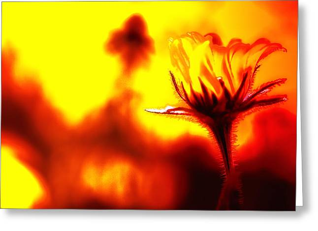 New Bloom Greeting Card by Jim Dohms