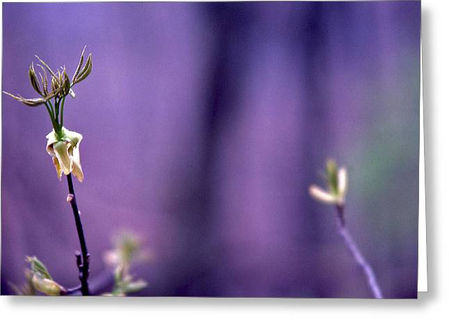 New Buds In Spring Greeting Card by Randy Muir