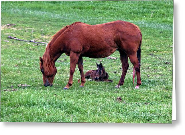 New Colt Greeting Card by Robert Bales