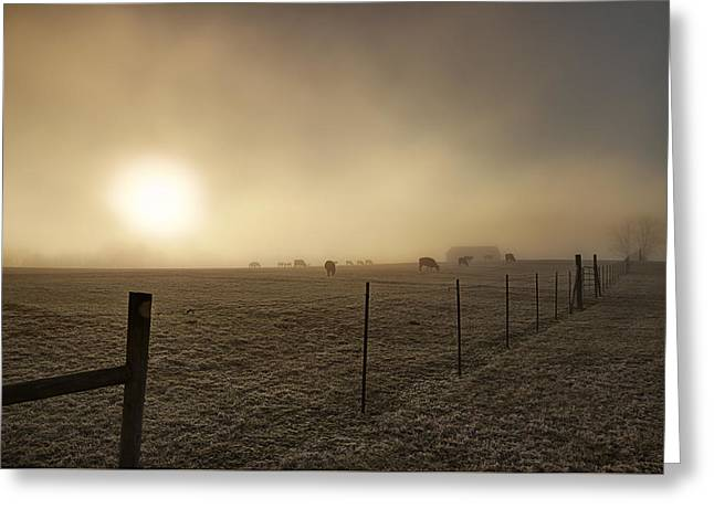 New Day Through The Fog Greeting Card by Mike Eingle