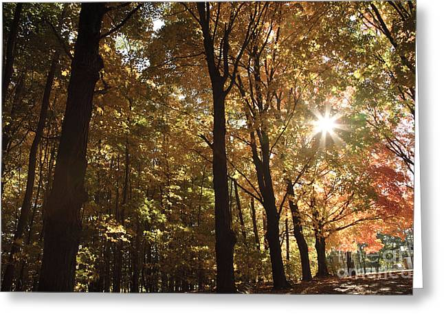 New England Autumn Forest Greeting Card by Erin Paul Donovan