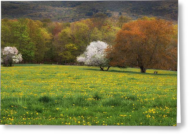 New England Color Of Spring Greeting Card by Bill Wakeley