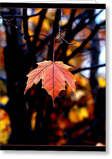 New England Fall - Lone Greeting Card by William Bray
