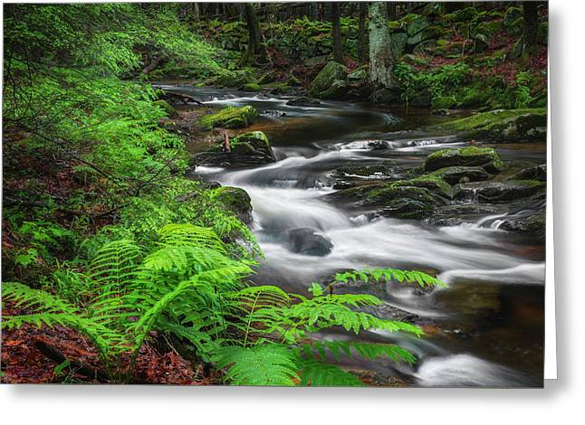 New England Spring Stream Greeting Card by Bill Wakeley