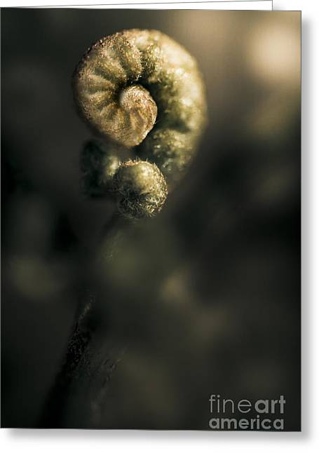 New Fern Greeting Card by Jorgo Photography - Wall Art Gallery