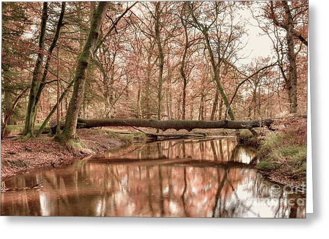 New Forest Greeting Card by Svetlana Sewell