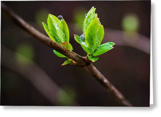 New Growth In The Rain Greeting Card