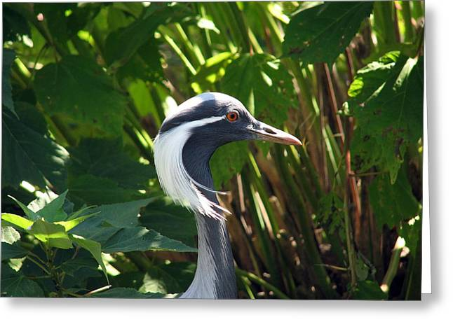 New Hairdo Greeting Card by Kevin  Sherf