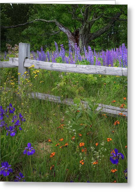New Hampshire Wildflowers Greeting Card