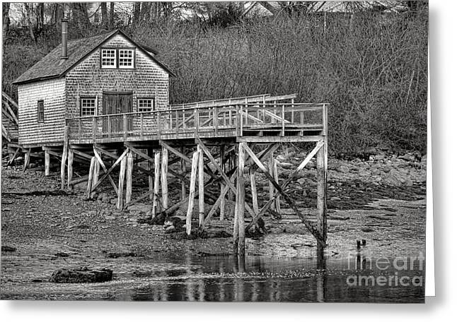 New Harbor Fishing Shack Greeting Card by Olivier Le Queinec