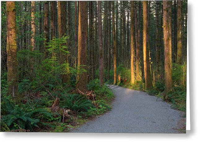 New Hiking Trail Greeting Card by Michael Russell