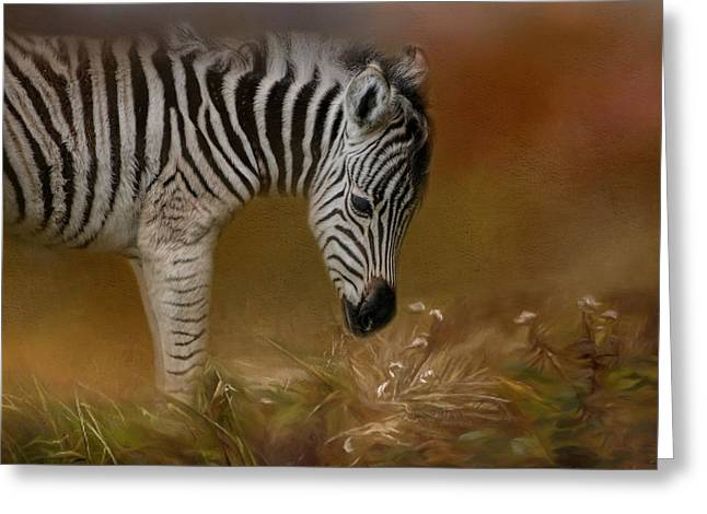 New Life Baby Zebra Wildlife Art By Jai Johnson Greeting Card by Jai Johnson