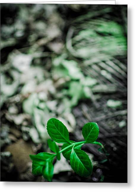 New Life From Ruins  Greeting Card