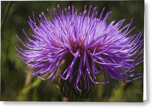 New Mexican Thistle Greeting Card