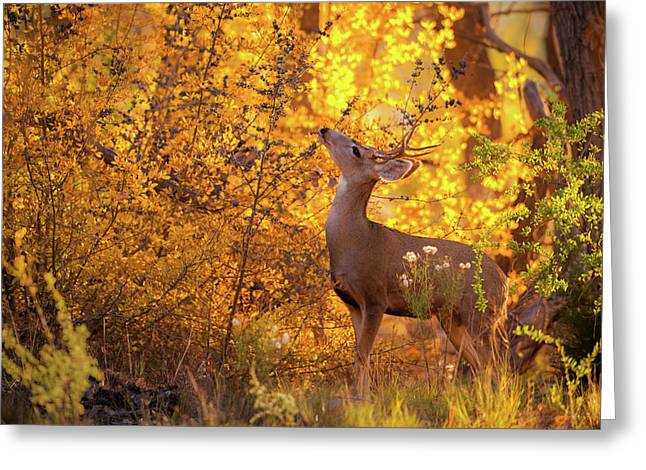 New Mexico Buck Browsing Greeting Card