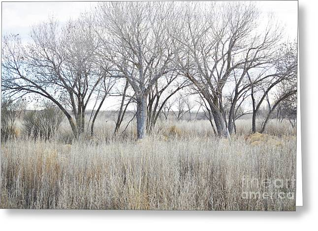 Greeting Card featuring the photograph New Mexico Desert Tree Field by Andrea Hazel Ihlefeld