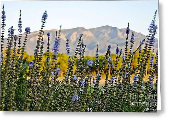 Santa Ana Beauty Greeting Card by Gina Savage