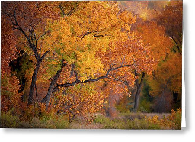 New Mexico Gold Greeting Card