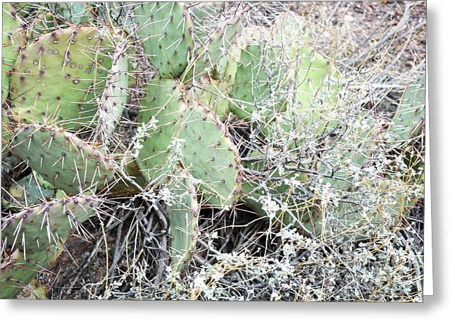Greeting Card featuring the photograph New Mexico Green Prickly Pear Cactus by Andrea Hazel Ihlefeld