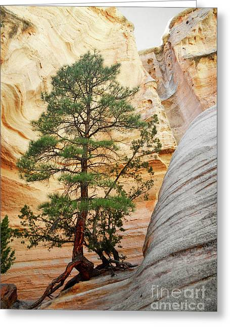New Mexico Tent Rocks Slot Canyon Tree Landscape Greeting Card by Andrea Hazel Ihlefeld