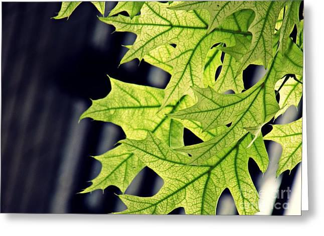 New Oak Leaves    Greeting Card