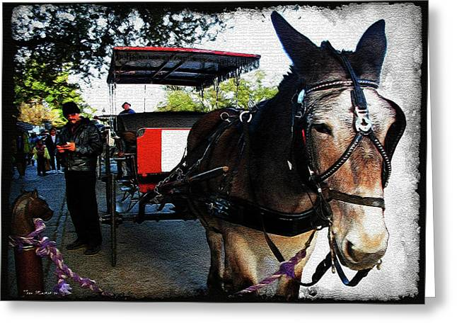 New Orleans Carriage Ride Greeting Card by Joan  Minchak