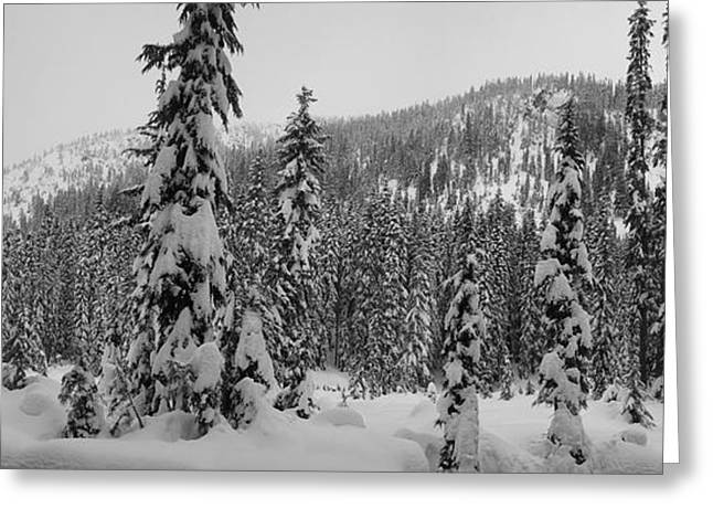 New Snow Greeting Card by Mark Camp