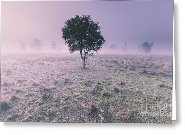 New South Wales Foggy Meadow Greeting Card by Jorgo Photography - Wall Art Gallery