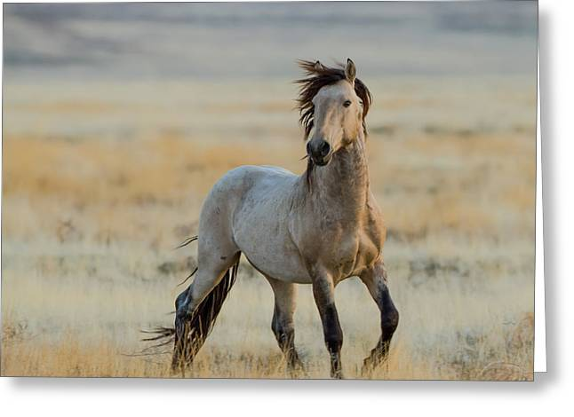 New Stallion Greeting Card