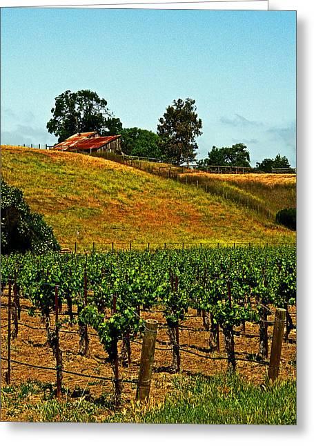 New Vineyard Greeting Card by Gary Brandes