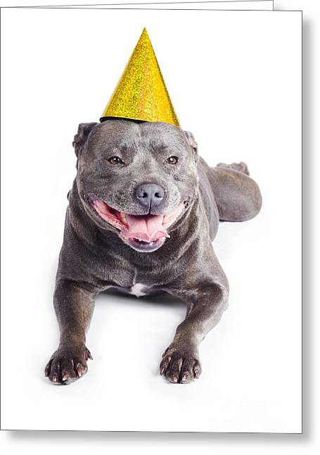 New Year Dog With Party Hat Greeting Card