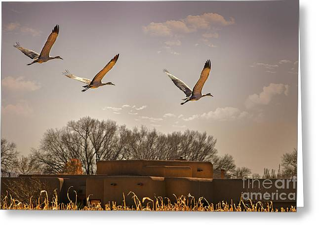 Flight Of The Cranes Greeting Card