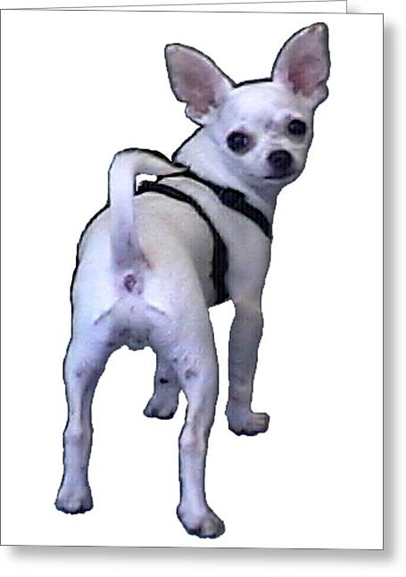 New York City Doggie 2002 What Are You Looking At 1a Jgibney Art 2009 Transp Greeting Card by jGibney