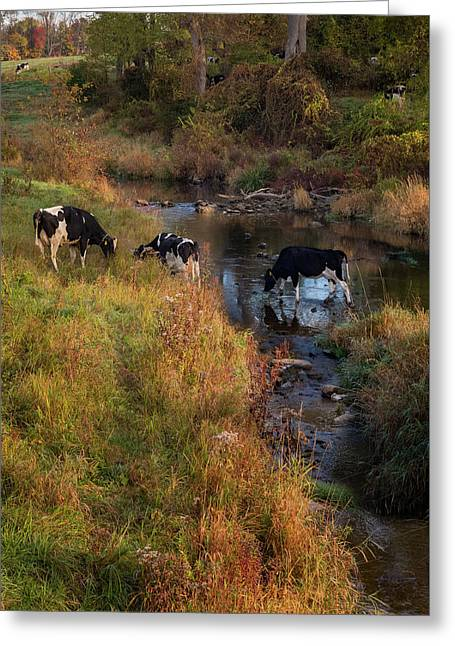 New York Country Life Greeting Card